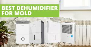 Best Dehumidifier For Mold